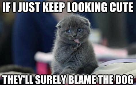 10+ Funny Cat Memes 2015   Cute Cat Pictures, Photos & Pics