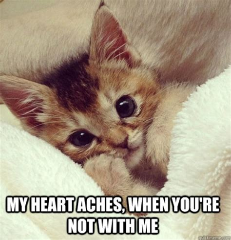 101 Best Cute Cat Memes that will make your heart melt ...