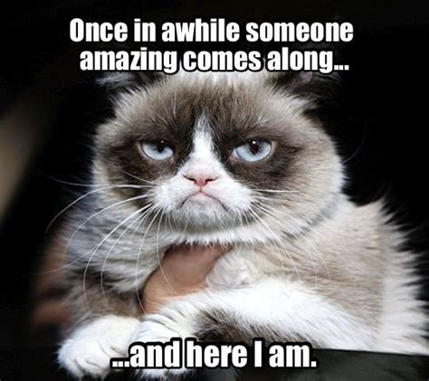 1012 best ideas about angry cat on Pinterest | Grumpy cat ...