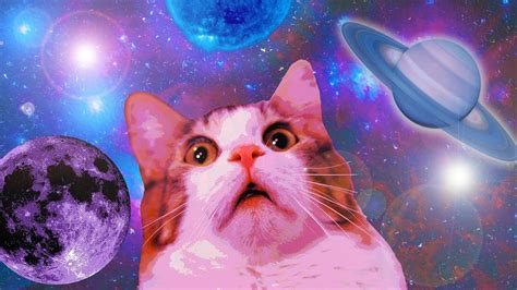 11 MIN OF DANK CAT MEMES   YouTube