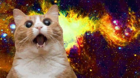 15 Best Cat Memes Ever