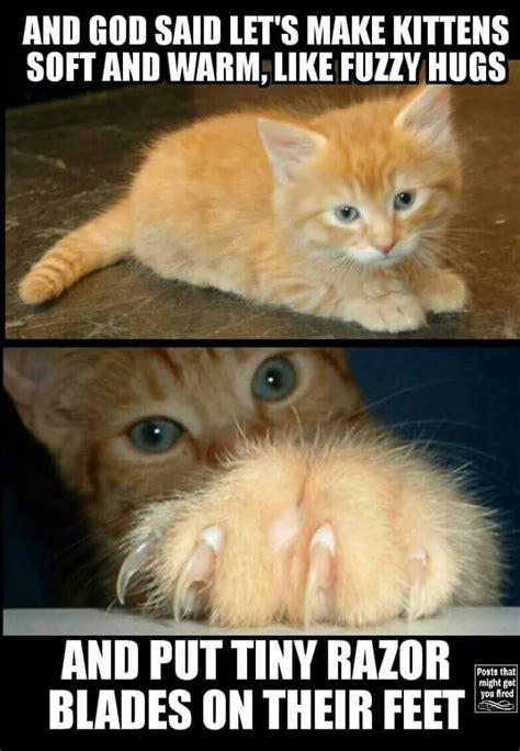 17 Best images about Cat Memes on Pinterest | Cat food ...
