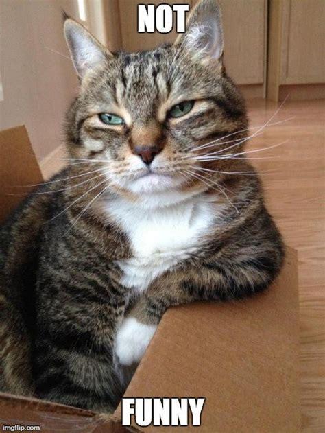 20 Cat Memes You ll Totally Adore | SayingImages.com