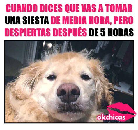 20 memes de perros que te harán llorar de la risa