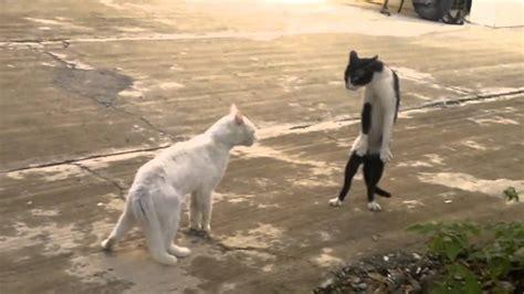 2013 very funny cat fights | MakeMeLaughs.com
