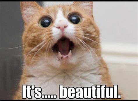 2048 Cat Meme