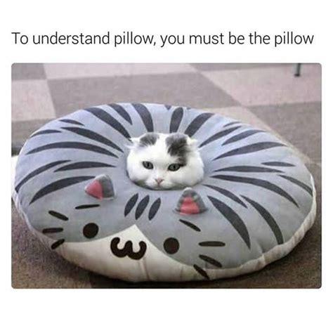 25+ best ideas about Funny cat memes on Pinterest | Cat ...