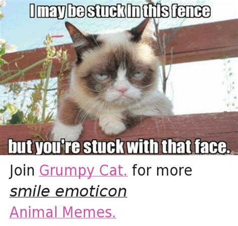 25+ Best Memes About Animals, Cats, Grumpy Cat, and Memes ...