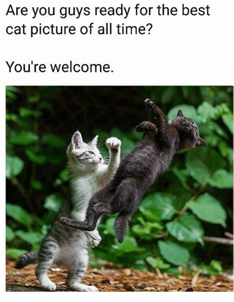 25+ Best Memes About Best Cat | Best Cat Memes