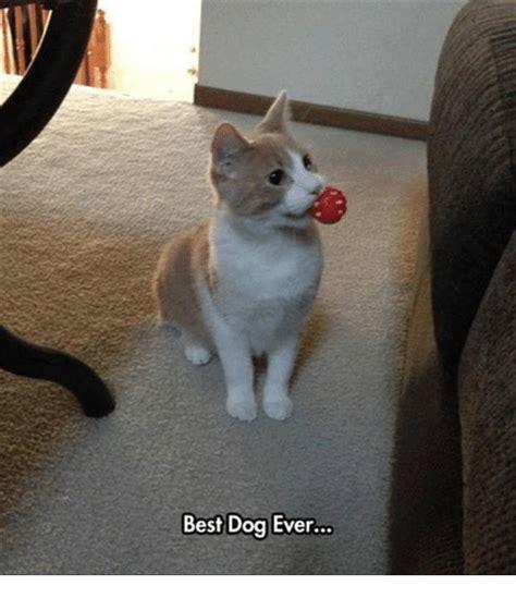 25+ Best Memes About Best Dog | Best Dog Memes