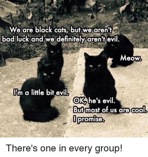 25+ Best Memes About Black Cats | Black Cats Memes