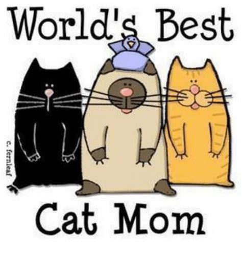 25+ Best Memes About Cat Mom | Cat Mom Memes