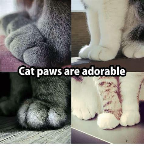 25+ Best Memes About Cat Paw | Cat Paw Memes
