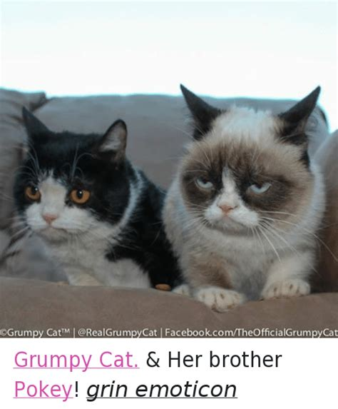 25+ Best Memes About Cats, Facebook, and Grumpy Cat | Cats ...