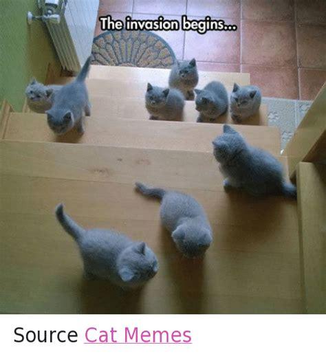 25+ Best Memes About Cats, Grumpy Cat, Meme, and Memes ...