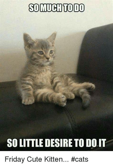 25+ Best Memes About Cute Kitten | Cute Kitten Memes