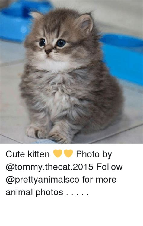 25+ Best Memes About Cute Kittens | Cute Kittens Memes