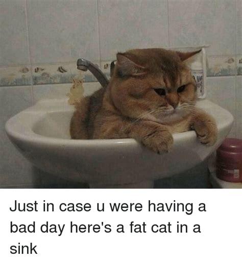 25+ Best Memes About Fat Cats | Fat Cats Memes
