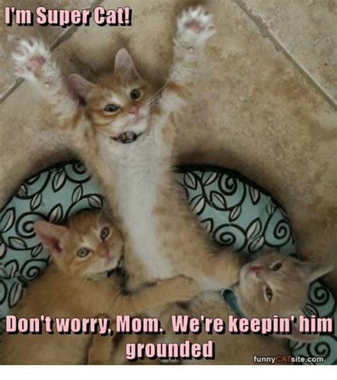25+ Best Memes About Funny Cats   Funny Cats Memes