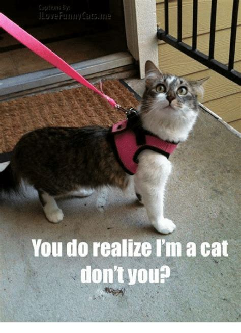 25+ Best Memes About Funny Cats | Funny Cats Memes