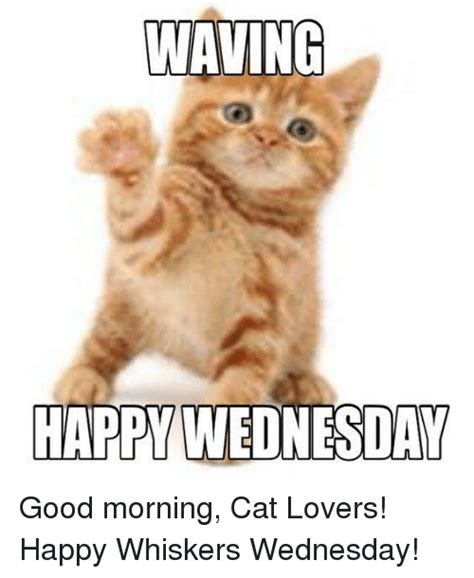 25+ Best Memes About Good Morning Cat | Good Morning Cat Memes