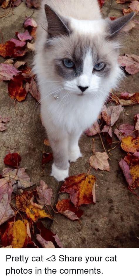 25+ Best Memes About Pretty Cat | Pretty Cat Memes