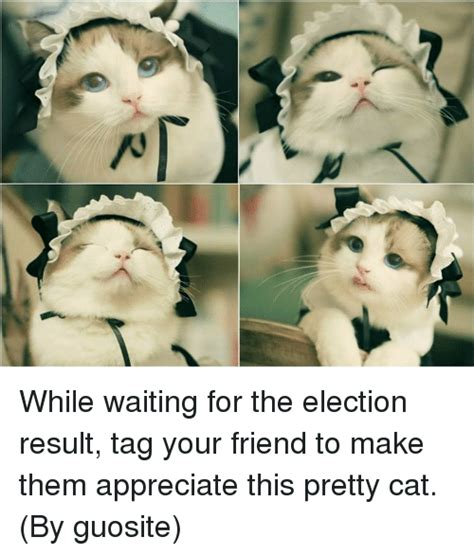25+ Best Memes About Pretty Cats | Pretty Cats Memes