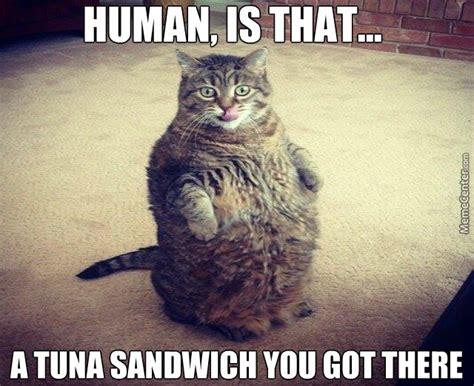 25 Of The Best Cat Memes | Beautiful Nigeria