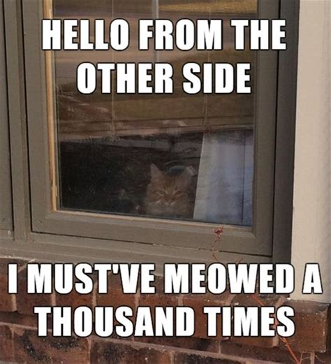 30 Funniest Cat Memes – Quotes Words Sayings