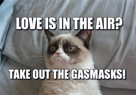 32 Funny Angry Cat Memes for Any Occasion   Freemake