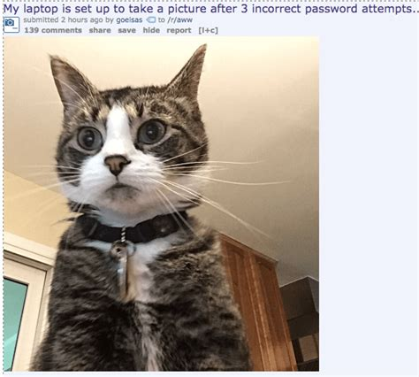 37 Of The Best Cat Memes The Internet Has Ever Made
