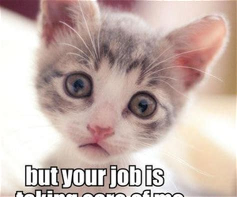 39 images about funny cat meme on We Heart It | See more ...