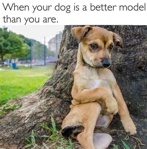 41 Funny Animal Pictures to Make You Laugh