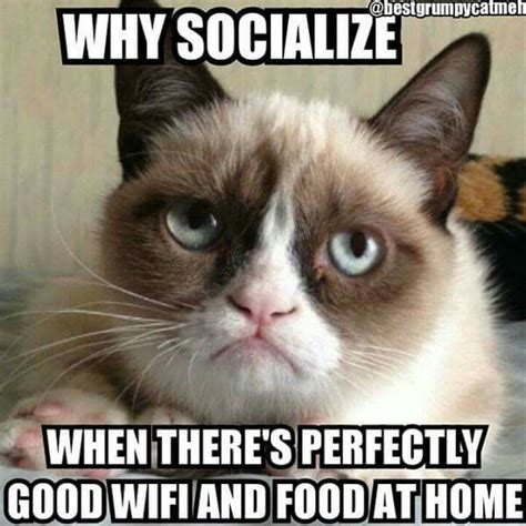 440 best GRUMPY CAT images on Pinterest | Funny stuff ...