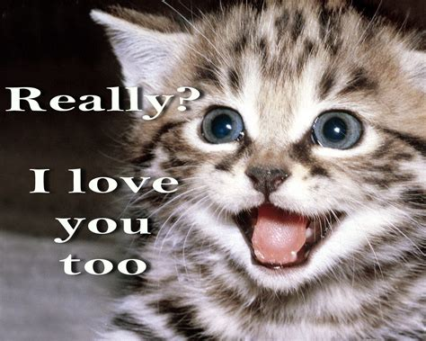 5 Cutest Cat memes ever! – Socially Fabulous & Fabulously ...