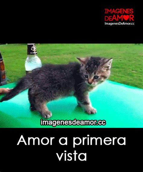 5 Gif de gatos graciosos con frases cortas de amor