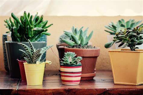 5 ideas de decoración de jardines pequeños con encanto ...