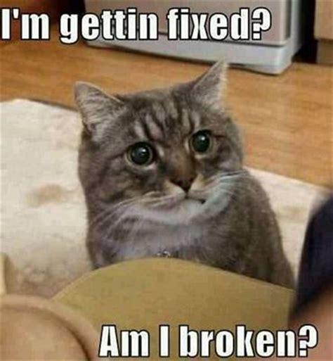 50 Best Cat Memes   Funny Cat Memes