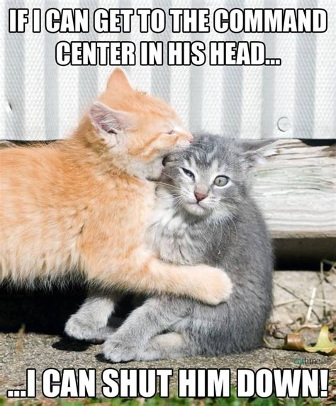 50 Very Hilarious Cute Cat Memes   Golfian.com