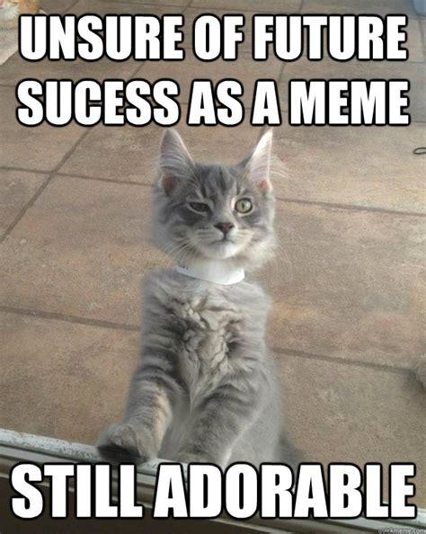 adorable kitten memes MEMEs