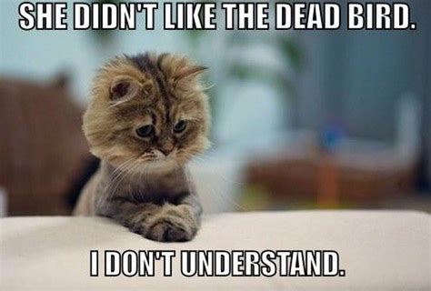 All Time Ideal Compilation Of The Funniest Cat Memes On ...