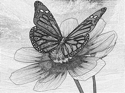 Amazing Drawings Of Butterflies | www.pixshark.com ...