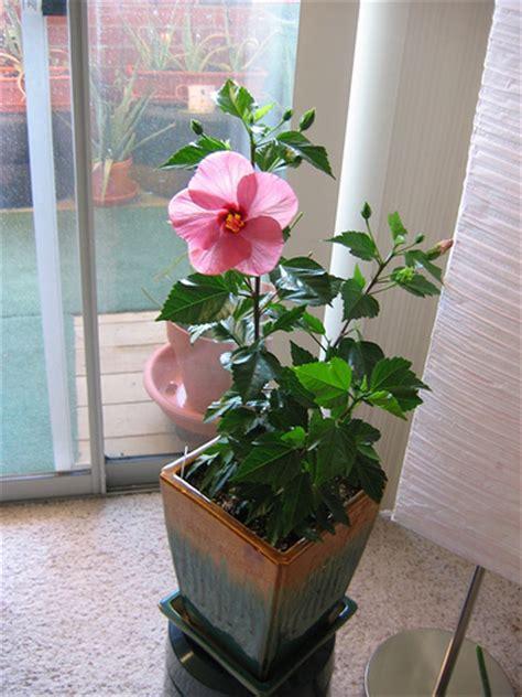 Amenajari interioare   6 Plante   Flori Apartament