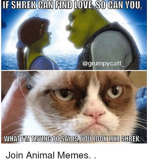 Animal I Love You Memes