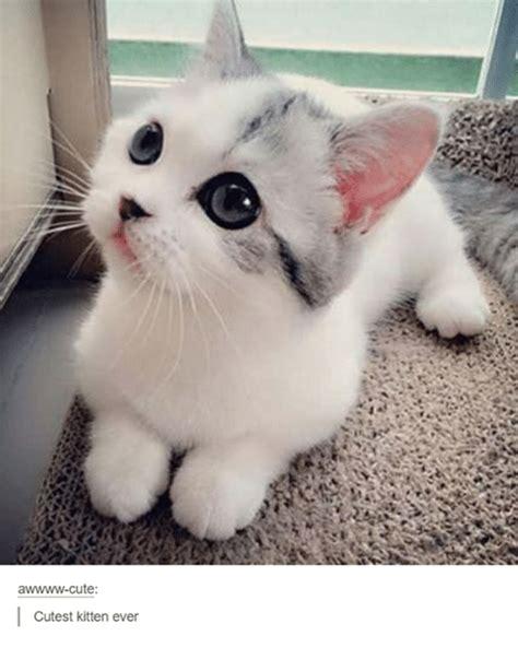 Awwww Cute Cutest Kitten Ever | Cute Meme on SIZZLE