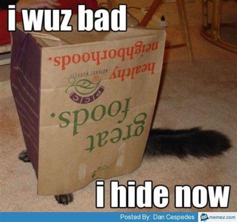 Bad cat | Memes.com