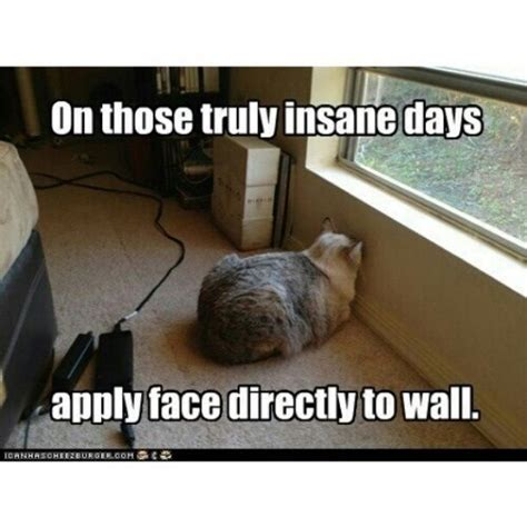Bad day #cat #humor #cats #funny #meme #cute =^..^= www ...
