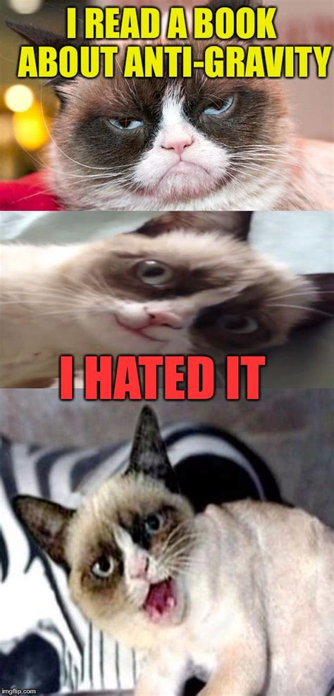 Bad Pun Grumpy Cat - Imgflip