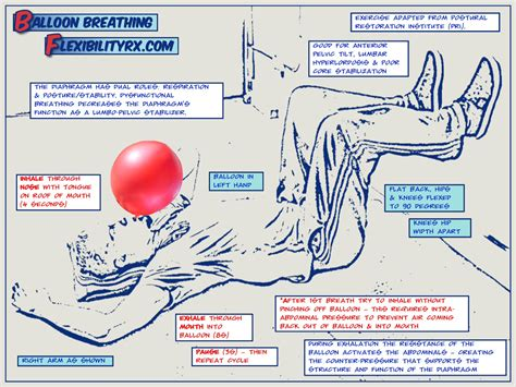 Balloon Breathing for Core Stability | FlexibilityRx ...