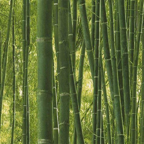 Bambu Decoracion Leroy Merlin – Cebril.com